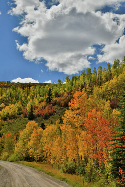 Photograph - Fall Colors On Wilson Mesa by Ray Mathis