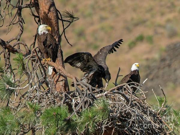 Birds Nest Photograph - Family Dinner by Mike Dawson