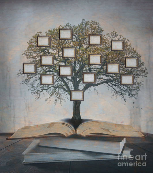 Wall Art - Photograph - Family Tree, Genealogy by Suzanne Tucker