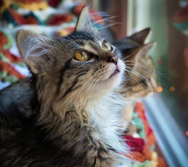 Photograph - Feline Stare by Jean Noren