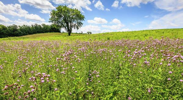 Wall Art - Photograph - Field Of Wildflowers In Kentucky by Alexey Stiop