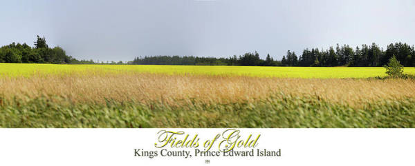 Photograph - Fields Of Gold by John Meader