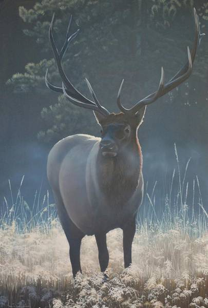 Painting - First Light - Bull Elk by Peter Mathios