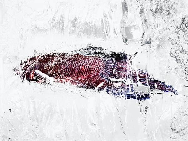 Fish Trap Photograph - Fish In Ice by Yusuke Murata