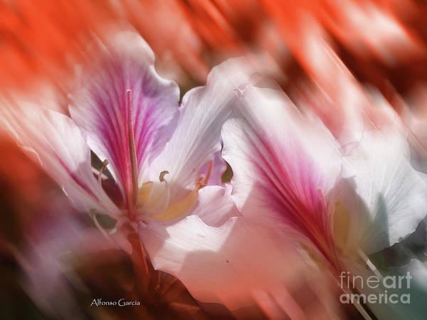 Photograph - Flores De Andalucia by Alfonso Garcia