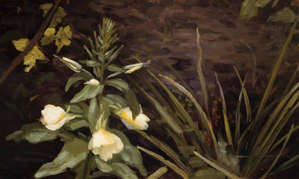Painting - Flowering Evening Primrose by Valdemar Schonheyder Moller