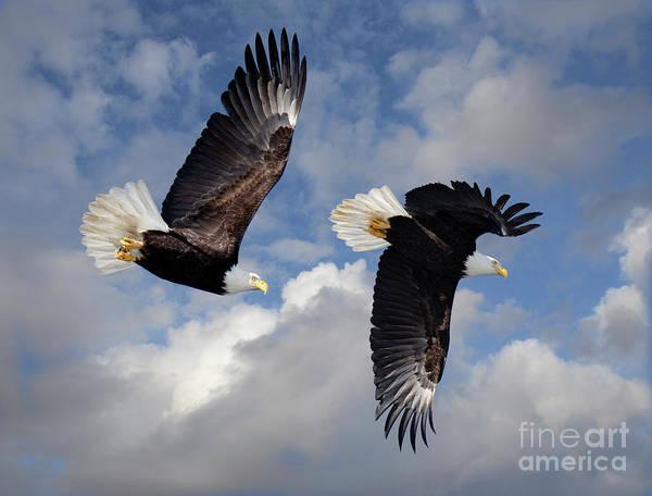 Wall Art - Photograph - Fly Like An Eagle by Bob Christopher
