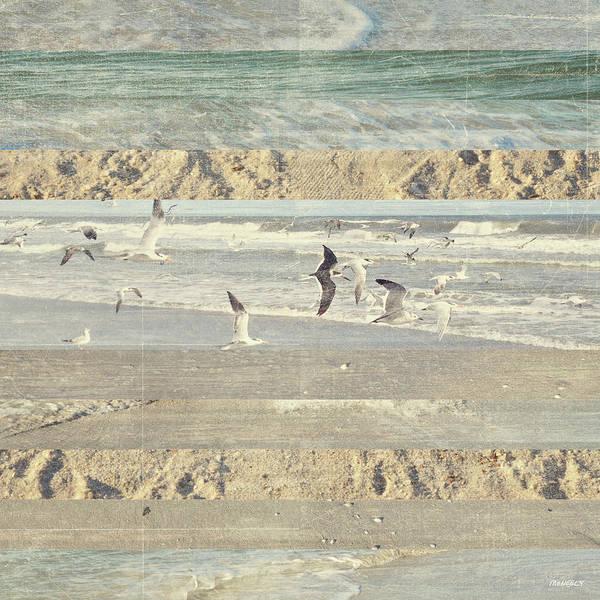 Wall Art - Photograph - Flying Beach Birds II by Dan Meneely
