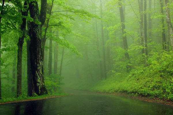 The Great Smoky Mountains Wall Art - Photograph - Foggy Morning At Roaring Fork Trail by Danita Delimont