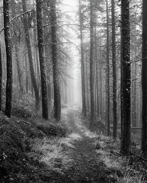 Photograph - Forest Path by Leland D Howard