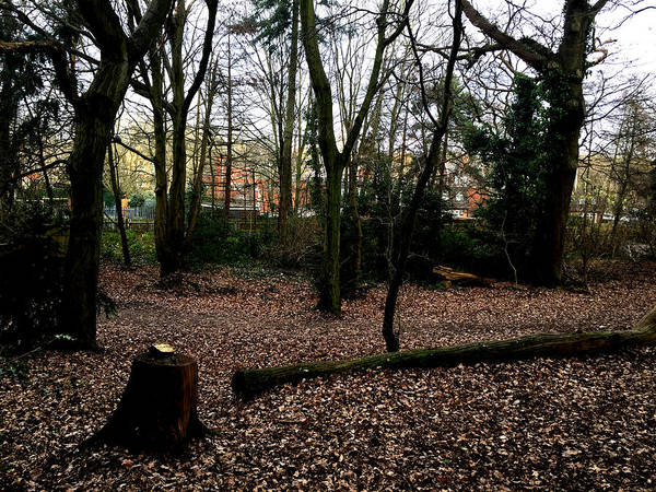 Photograph - Forest Trees In Highgate Woods 63 by Artist Dot
