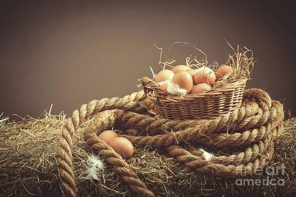 Wall Art - Photograph - Fresh Eggs by Amanda Elwell