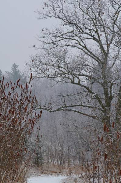Wall Art - Photograph - Fresh Snow by Greg Hayhoe