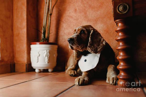Photograph - Funny Dog With Bib Inside House. by Joaquin Corbalan