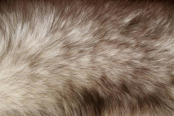 Cowhide Wall Art - Photograph - Fur Detail by Hypertizer
