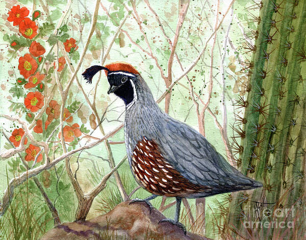 Smith Rock Painting - Gambel's Quail by Marilyn Smith
