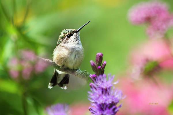 Photograph - Hummingbird Garden by Christina Rollo