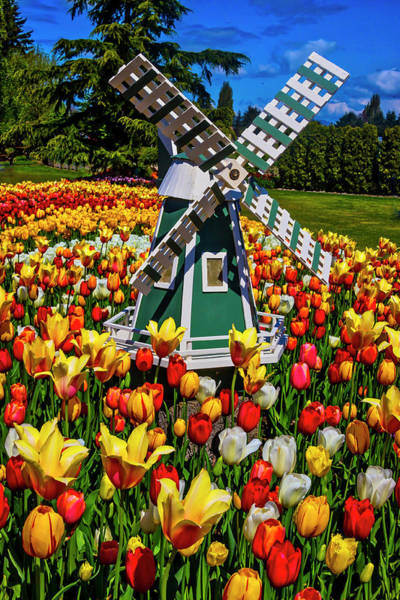 Wall Art - Photograph - Garden Windmill by Garry Gay