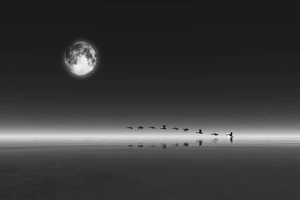 Digital Art - Geese by Jan Keteleer