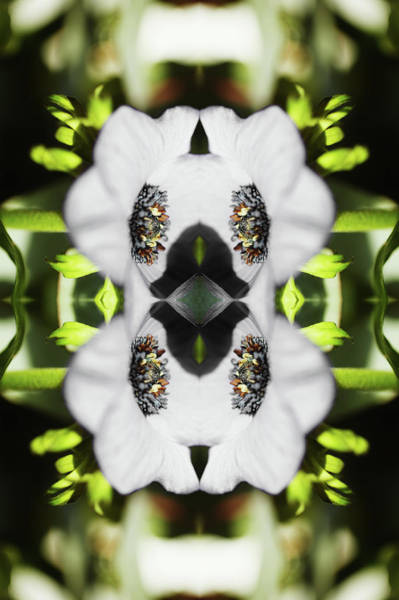 Photograph - Gerbera Flower by Silvia Otte