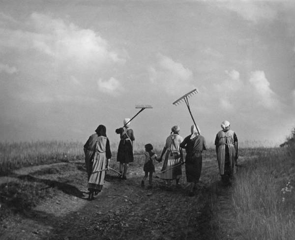 Farm Photograph - German Farming by Fpg