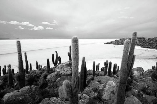 Photograph - Giant Cacti On Isla Incahuasi, Bolivia by Aidan Moran