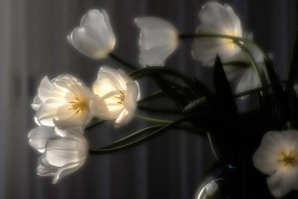 Photograph - Glowing Tulips by Wolfgang Stocker