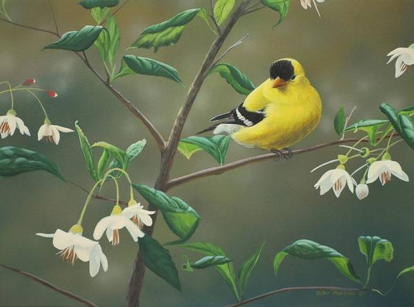 Painting - Goldfinch And Snowbells by Peter Mathios