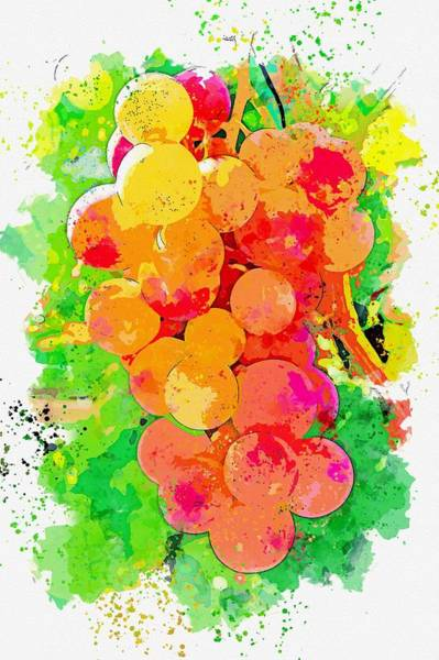 Painting - Grape -  Watercolor By Ahmet Asar by Ahmet Asar