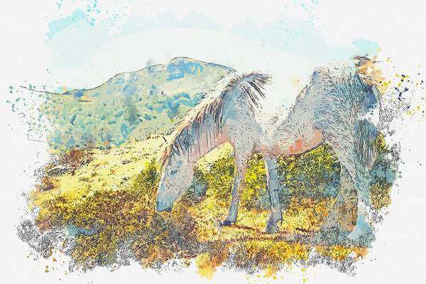 Painting - gray horse grazing -  watercolor by Adam Asar by Adam Asar