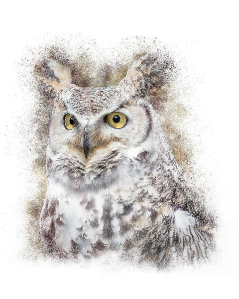 Photograph - Great Horned Owl Portrait by Patti Deters