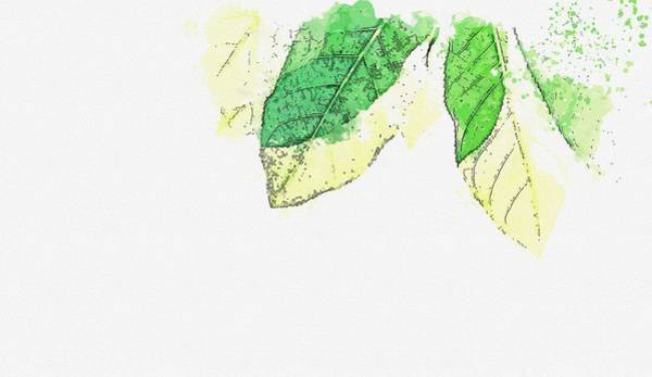 Wall Art - Painting - Green Leafed Plants -  Watercolor By Adam Asar by Adam Asar
