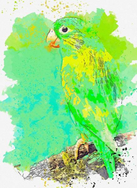 Wall Art - Painting - Green Macaw -  Watercolor By Ahmet Asar by Ahmet Asar