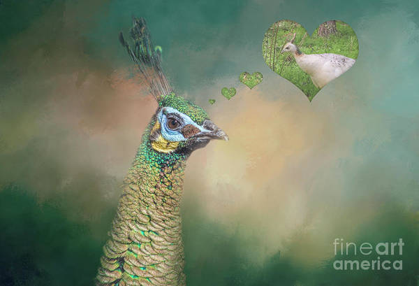 Pheasant Digital Art - Dreaming Of My Love by Elisabeth Lucas