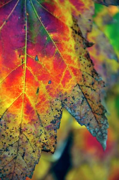 Photograph - Green Red Yellow Leaves 6020 by Jerry Sodorff