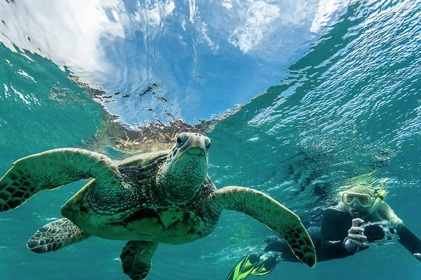 Underwater Camera Photograph - Green Sea Turtle Chelonia Mydas by Michael Nolan / Robertharding