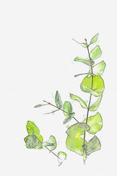 Painting - Green -  Watercolor By Ahmet Asar by Ahmet Asar