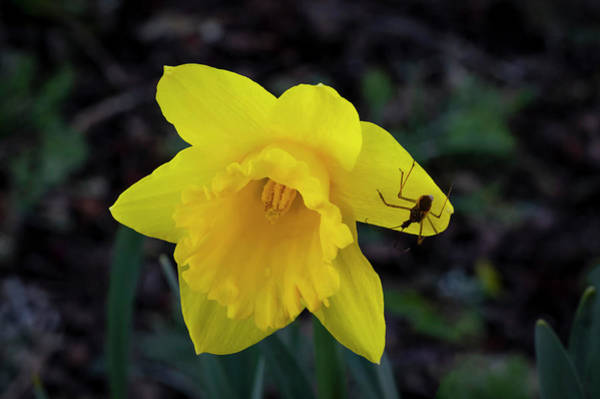 Photograph - Greeting Spring by Steven Clark