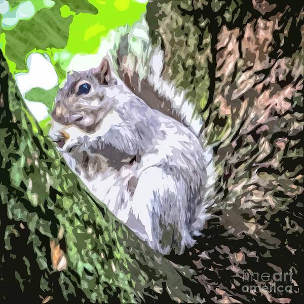 Photograph - Grey Squirrel by Nigel Dudson