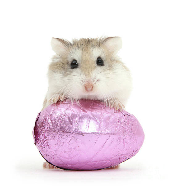 Photograph - Hammy Easter by Warren Photographic