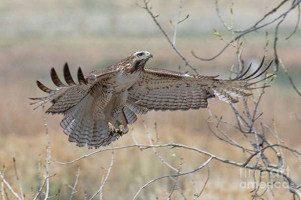 Photograph - Happy Landing by Jim Garrison