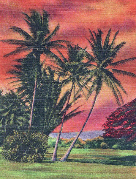 Palm Trees Digital Art - Hawaii by Long Shot