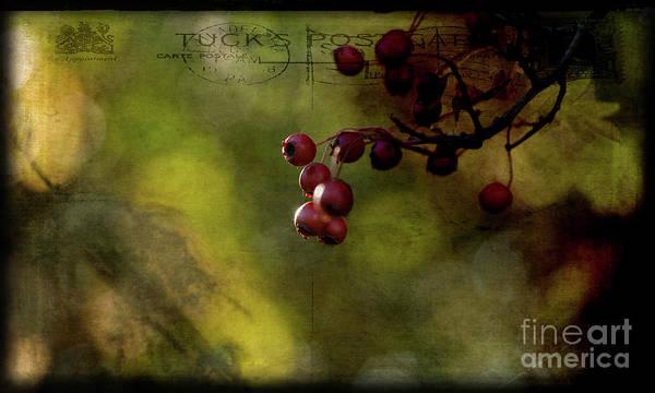 Digital Art - Hawthorn by Liz Alderdice