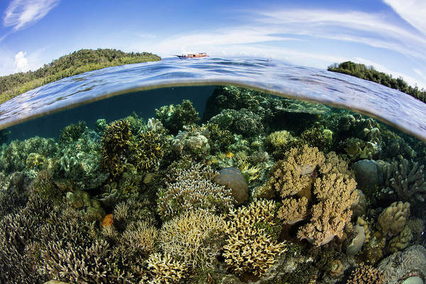 Photograph - Healthy Corals Thrive In A Remote Part by Ethan Daniels