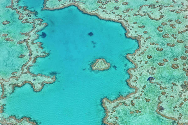 Wall Art - Photograph - Heart Reef, Part Of Great Barrier Reef by Peter Adams