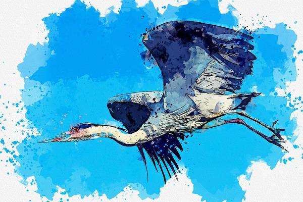 Painting - Heron Wading Bird Watercolor By Ahmet Asar by Celestial Images