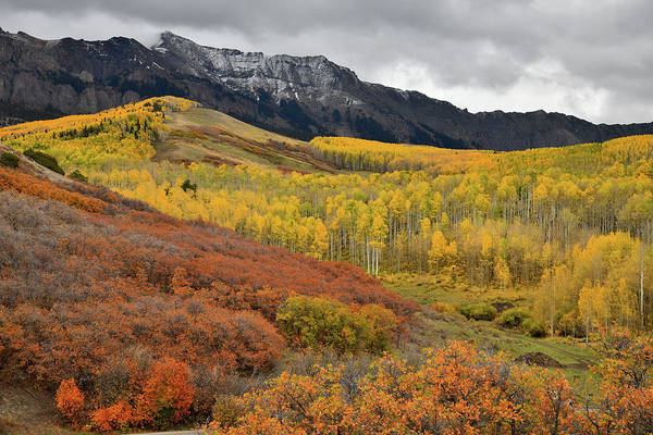 Photograph - High Country Fall Color Along Last Dollar Road by Ray Mathis