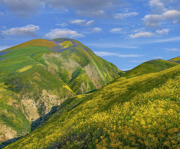 Photograph - Hillside Daisy Superbloom, Temblor by