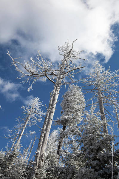 Southern Usa Photograph - Hoar Frost On Dead Trees by Jerry Whaley