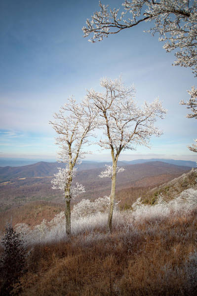 Photograph - Hoarfrost Gathers by Mark Duehmig